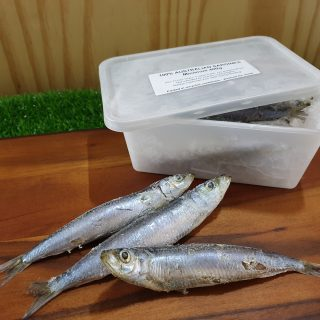 Australian Wild Caught Sardines / Pilchards 400g available at The Curious Dog